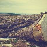 A igreja e o meio ambiente